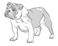Posição do buldogue da ilustração do desenho da mão Imagem de Stock Royalty Free