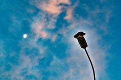Posição do corvo em um poste de luz que negligencia o céu e a lua acima imagens de stock