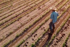Posição do fazendeiro no campo cultivado do feijão de soja, opinião de ângulo alto foto de stock royalty free