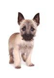 Posição do filhote de cachorro do monte de pedras Fotos de Stock Royalty Free
