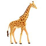 Posição do girafa do vetor isolada Imagem de Stock Royalty Free