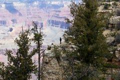 Posição do homem na borda sul de Grand Canyon imagem de stock