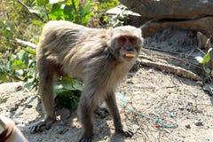 Posição do macaco ou dos simians imagens de stock