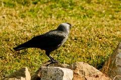 Posição do pássaro Fotografia de Stock Royalty Free