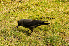 Posição do pássaro Foto de Stock