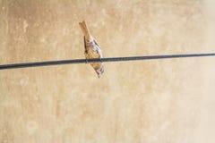 Posição do pássaro em fios elétricos fotos de stock
