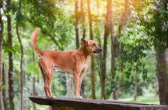 Posição do parque do cão na floresta da árvore do verde da madeira e da natureza fotos de stock