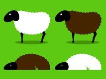 Posição e sono preto e branco dos carneiros Imagem de Stock