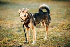 Posição equipada com pernas do cão do tamanho médio três misturados da raça imagem de stock royalty free