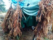 Posição estacionária de um caçador na cabana da floresta coberto de vegetação com as ervas daninhas a camuflar na caça fotos de stock