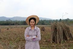 Posição fêmea do fazendeiro e caixa do aperto ao lado da pilha de membro das tapiocas na exploração agrícola imagem de stock royalty free
