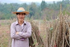 Posição masculina do fazendeiro e caixa do aperto ao lado da pilha de membro das tapiocas na exploração agrícola fotografia de stock royalty free