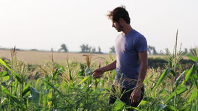 Posição nova do fazendeiro e descanso ao trabalhar na exploração agrícola orgânica do eco do campo de milho filme