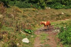 Posição vermelha do cavalo em uma estrada no campo imagem de stock