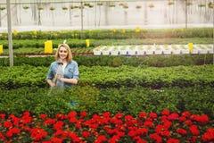 Posi??o bonita de sorriso da jovem mulher na estufa para cultivo de laranjas e em plantas molhando imagens de stock royalty free