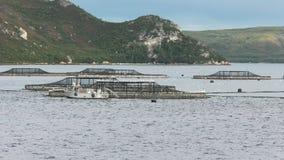 Posibilidad muy remota de las plumas de color salmón en el puerto del macquarie, Tasmania almacen de video