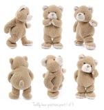 Posiciones de oso de peluche Foto de archivo libre de regalías