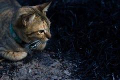Posiciones en cuclillas del gato Fotografía de archivo libre de regalías