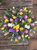 Posie da primavera Imagem de Stock