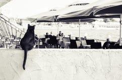 posiedzenie czarnego kota Zdjęcie Stock