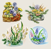 Posies of flowers. Set of hand drawn unusual posies of flowers with native objects: log, rocks, berries Stock Image