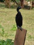 Posing bird Stock Images