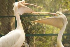 The posing birds! Royalty Free Stock Image