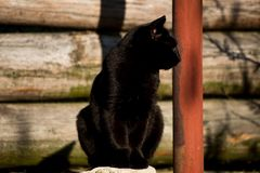 Posing black cat royalty free stock photography