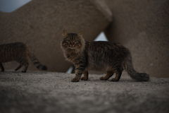 Posing cat. A cat walking around the pier of Licata's harbor Royalty Free Stock Photography