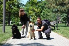 Posing dogs Royalty Free Stock Photos