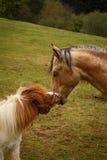 posing horses on a green mountain meadows Royalty Free Stock Photo
