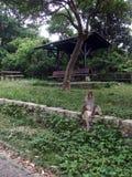 Posing Monkey. Monkey posing for the camera Royalty Free Stock Image