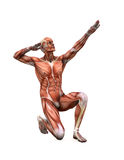 Posing muscles. Muscle man in strange poses stock illustration