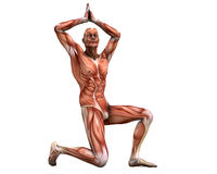 Posing muscles. Muscle man in strange poses vector illustration