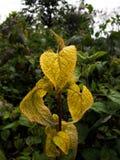 A Posing Plant stock photos