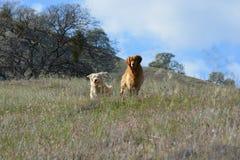 Posing Pups royalty free stock photos