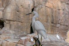 A Posing Sea Bird in San Diego Stock Photos