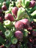 Positieve cactus Stock Foto's