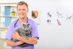 Positieve dierenarts die een kat onderzoeken Royalty-vrije Stock Foto