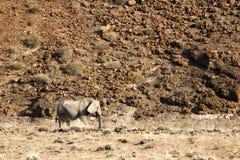 Position adulte d'éléphant africain au point d'eau dans le ressortissant d'Etosha photo stock