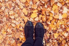 Position au sol couvert de feuilles d'automne Photos libres de droits