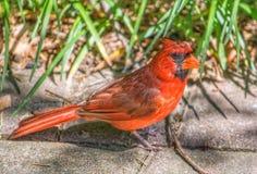 Position cardinale sur le trottoir Image libre de droits
