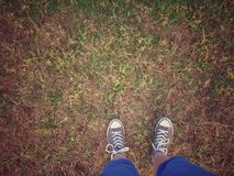 Position dans l'herbe verte Image libre de droits