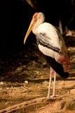 Position dans le zoo Image stock