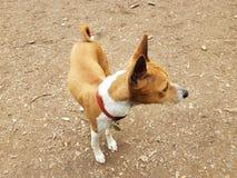 Position de chien tordue Images stock