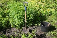 Position de creusement des herbes Photo stock