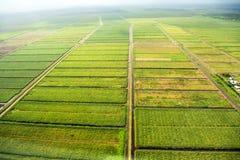 Position de primev?re farineuse des champs avec des voies d'eau, adopt?e de l'avion photographie stock libre de droits