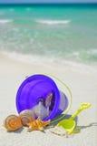 Position de seashells photos stock