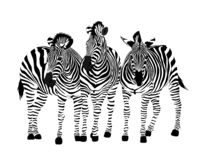 Position de trois zèbres Ornement de Savannah Animal illustration stock