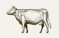 Position de vache, profil de vue Animal de ferme, boeuf, lait Illustration de vecteur de croquis illustration de vecteur